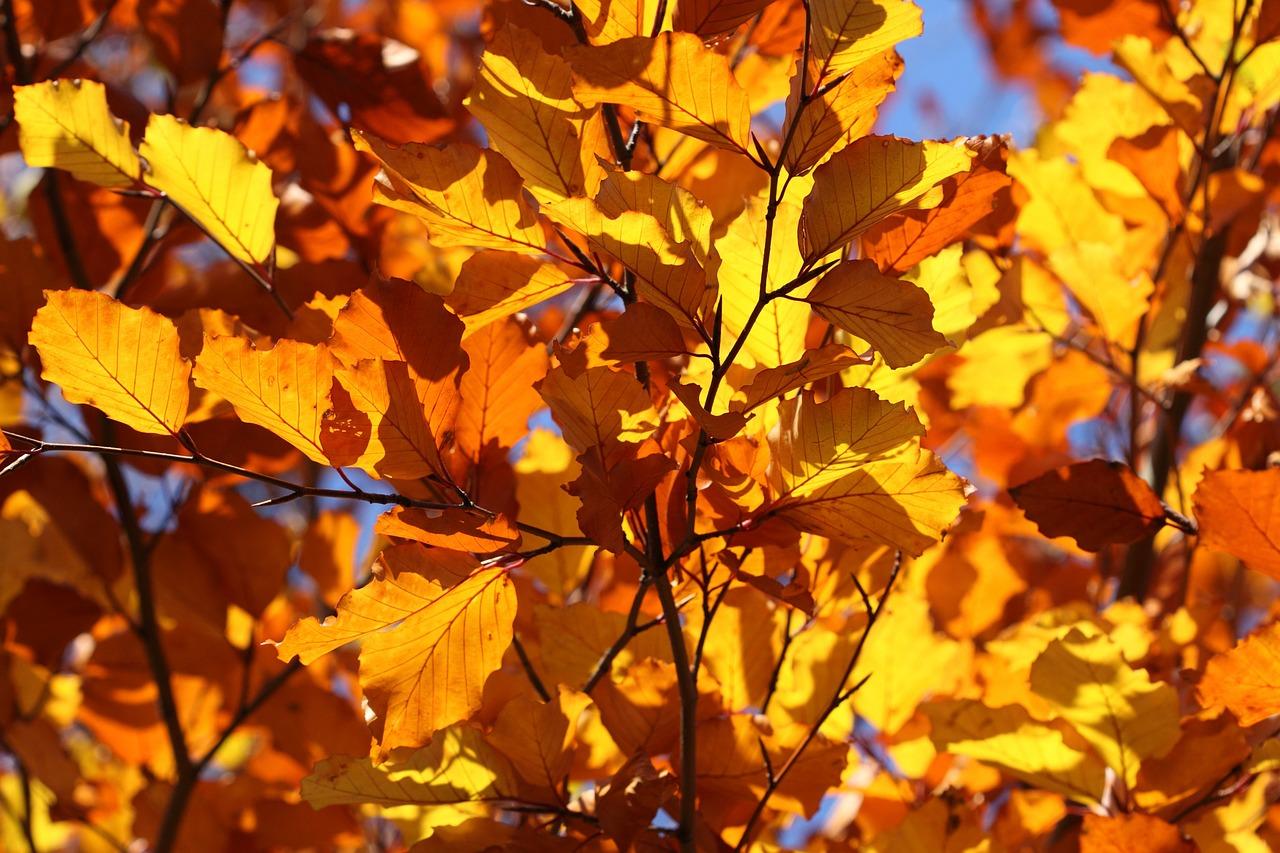 leaf-2012_1280.jpg