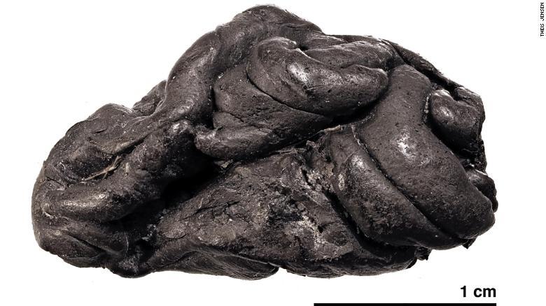 Goma de mascar de la Edad de Piedra tiene pistas sobre la vida de una niña que vivió hace 5.700 años 1