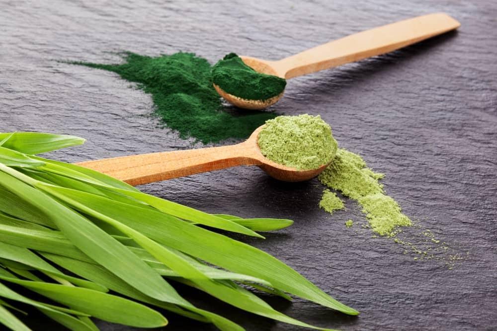 Sự khác biệt giữa tảo lục Chlorella và tảo xoắn Spirulina là gì? - Ảnh 3