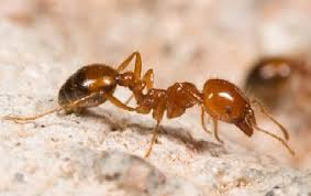 A-Z of Crawling Insects - Alpeco Pest Control & Extermination