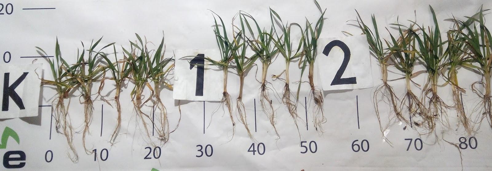 seeds-photo-ecoorganic