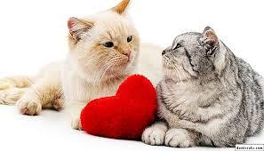 ผลการค้นหารูปภาพสำหรับ ใจเย็นกับแมว