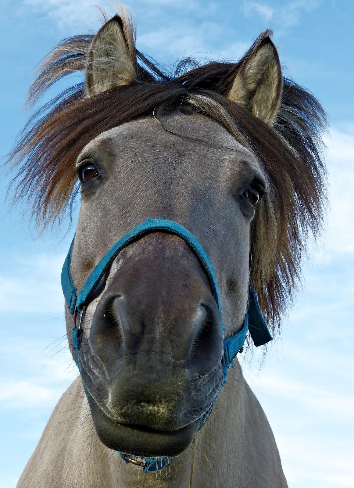 Faccione in primo piano di un cavallo ripreso dal basso