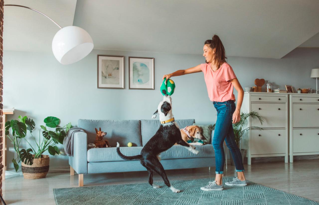 Foto: pessoa fazendo brincadeiras em casa com o seu cachorro