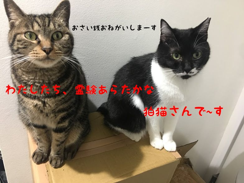 初詣におすすめ、東京の猫神社!