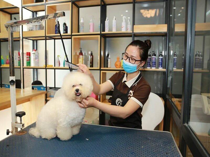 Dịch vụ chăm sóc thú cưng- những mặt hàng ít người kinh doanh