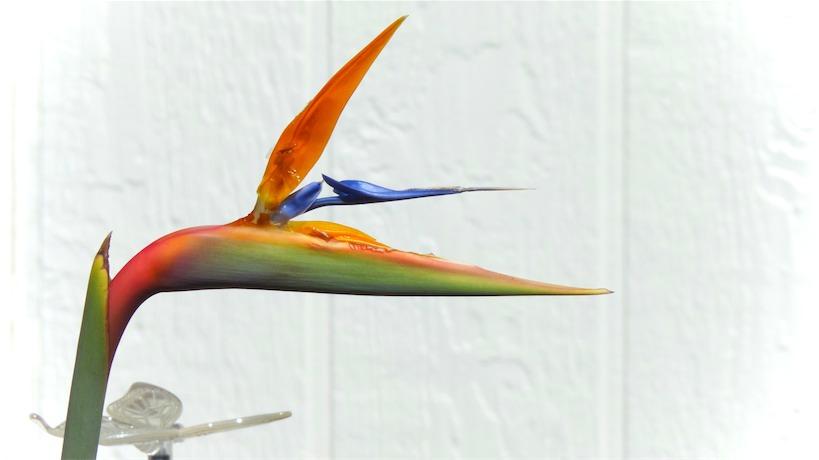Paradise Bird.jpg