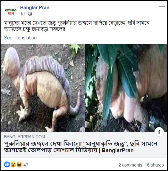 Human Animal in purulia.png