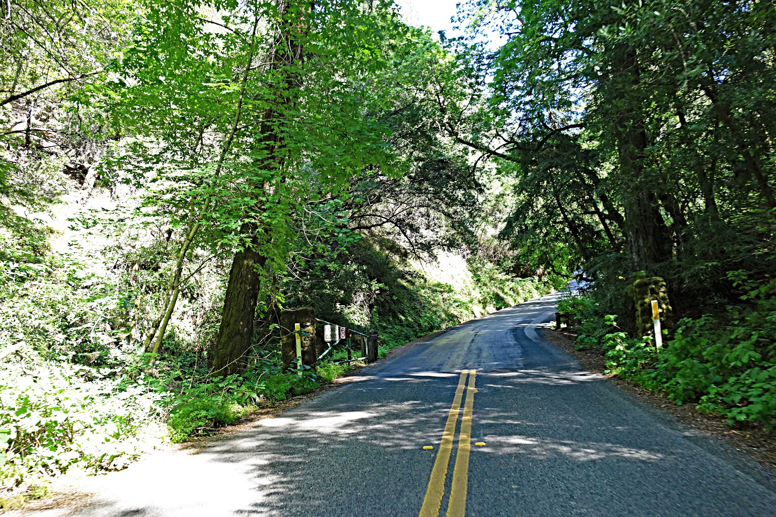Bike climb to Bald Mountain - road and forest - start of climb