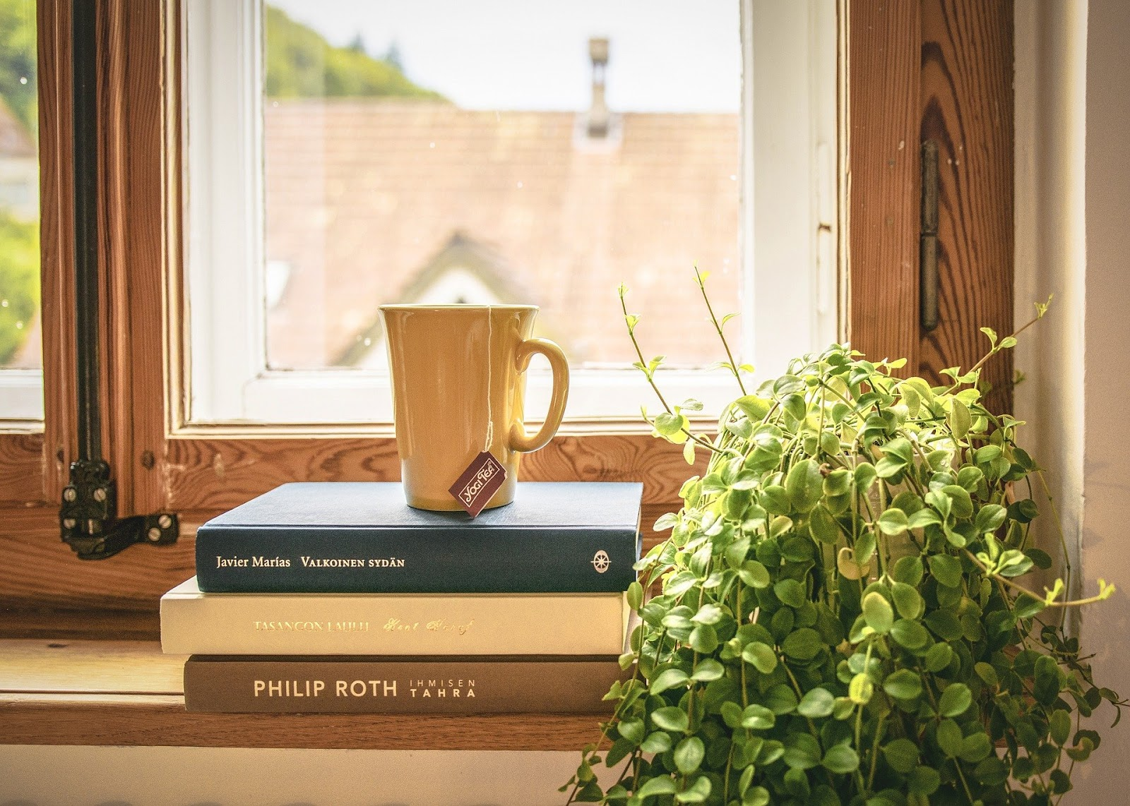 Plant by window with books and tea