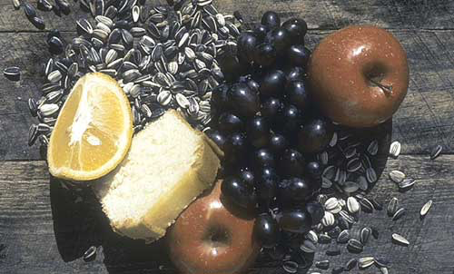 An aviculture diet used commonly in the 1980's