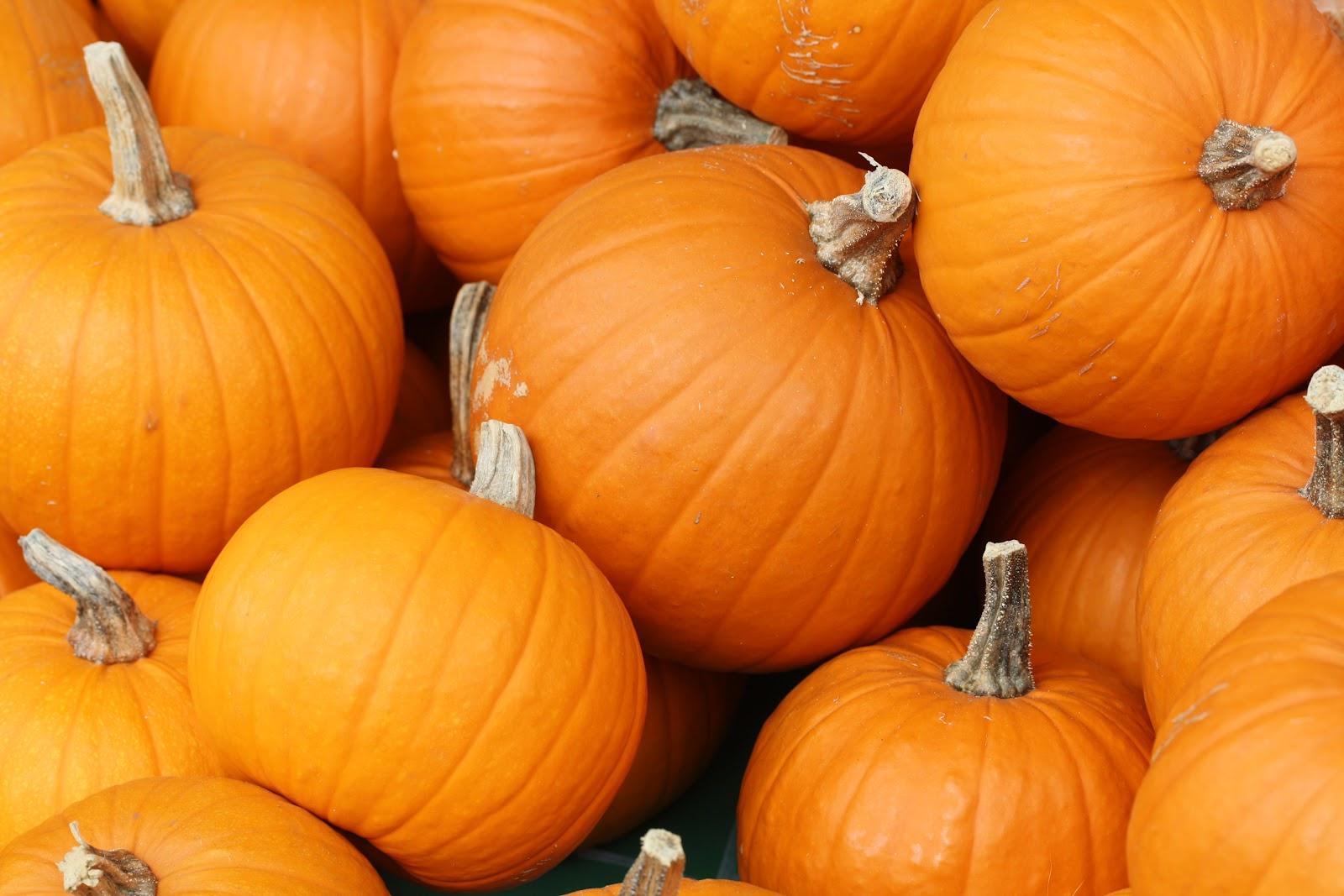 Bake_these_(pumpkins_in_Toronto).jpg