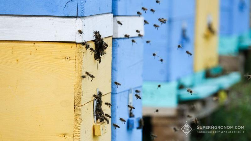 Бджоли vs агрономи: є вихід з протистояння фото 4 LNZ Group