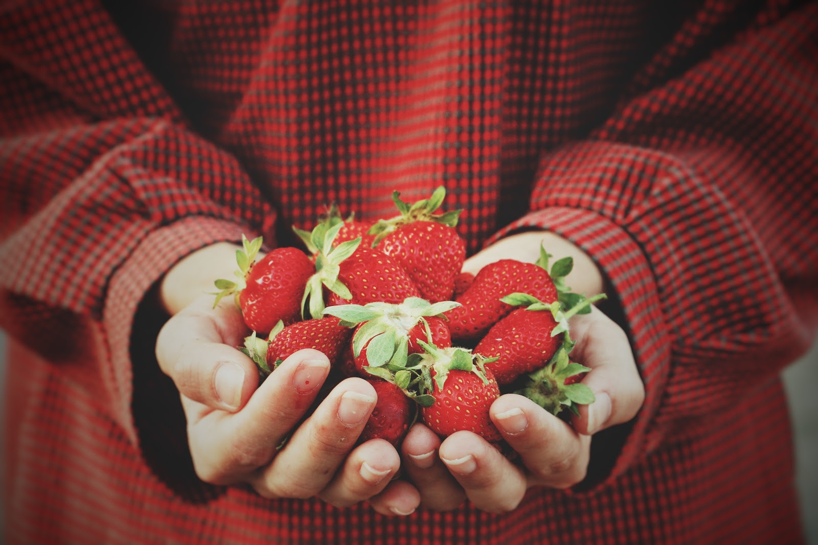 Gut cleanse: hands hold strawberries