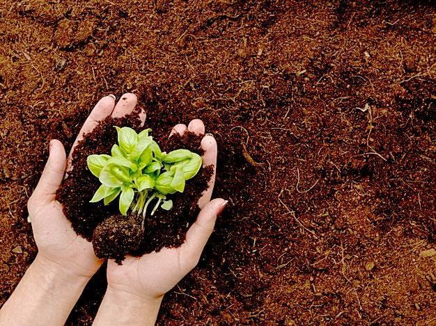 تصویر آماده کردن خاک جهت کشت بذر #3