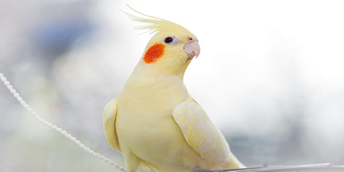 Pássaro com penas brancas  Descrição gerada automaticamente com confiança média