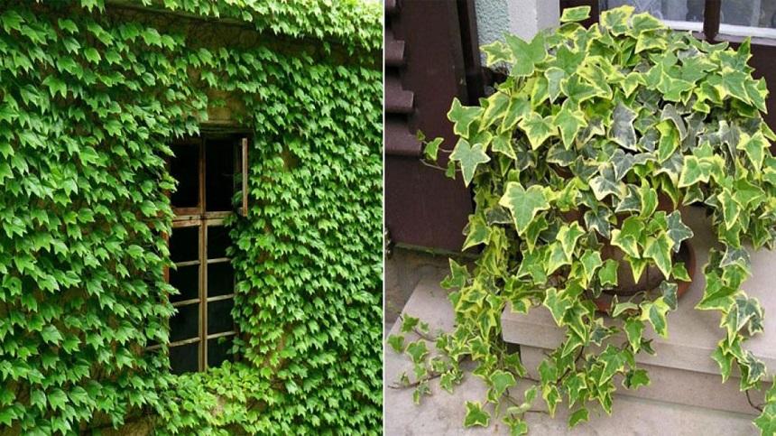 Lắp đặt cửa sổ kết hợp trồng cây thân thân leo giúp thông thoáng không gian, thân thiện với môi trường