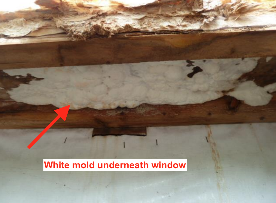 mold underneath window from construction defect