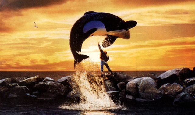free-willy.jpg