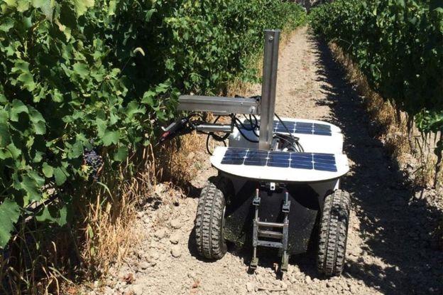 Робот по обрезке винограда