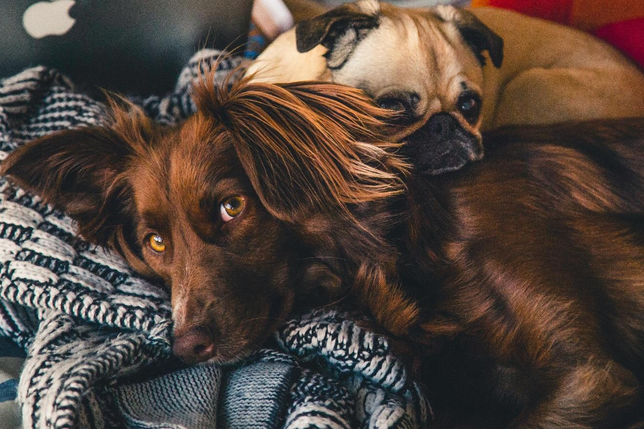 4 COMMON PETS ILLNESS IN WINTERS