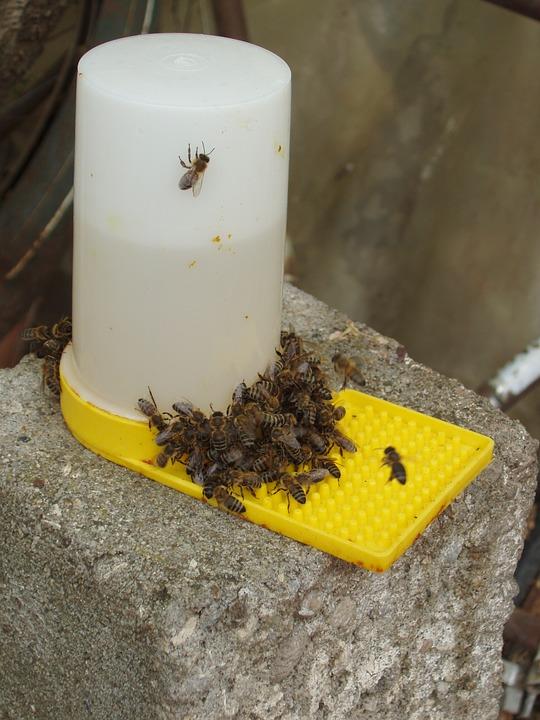 żywienie pszczół