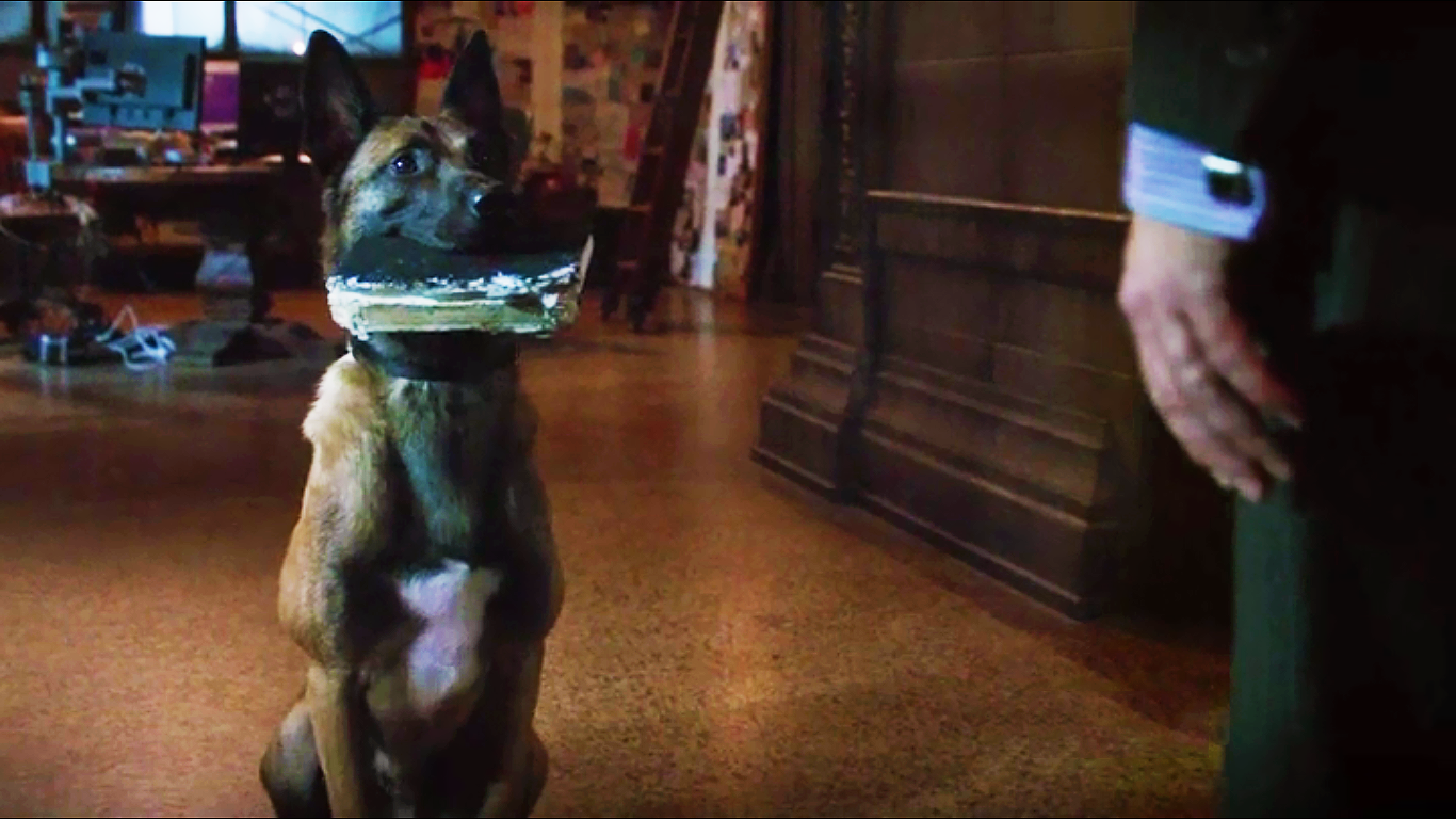 Person Of Interest: Favourite Bear moments - TV com
