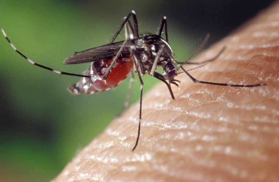 female mosquito biting human skin - targeted by pest control Sydney