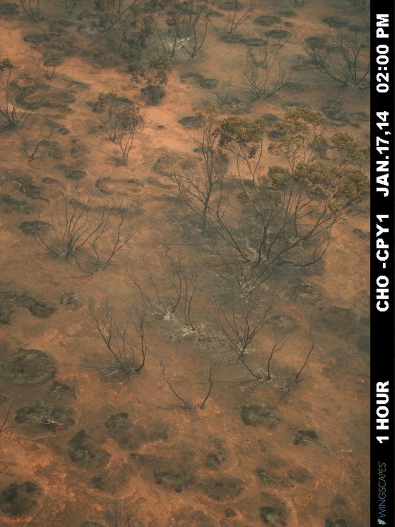 http://www.supersites.net.au/images/figure/pheno9.jpg