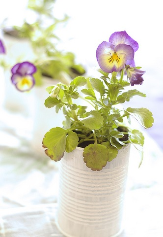 Цветы на балконе и террасе весной, Цветы на балконе, весенние цветы