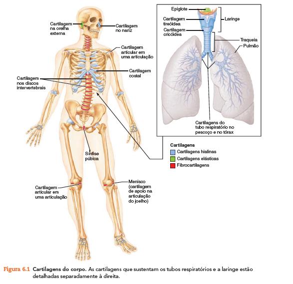Resumo Anatomia Introdução Ao Estudo De Ossos E