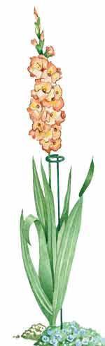 support for gladiolus stem