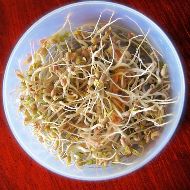 C:\Users\EQUIPO\Downloads\bean-sprouts-657415_640.jpg