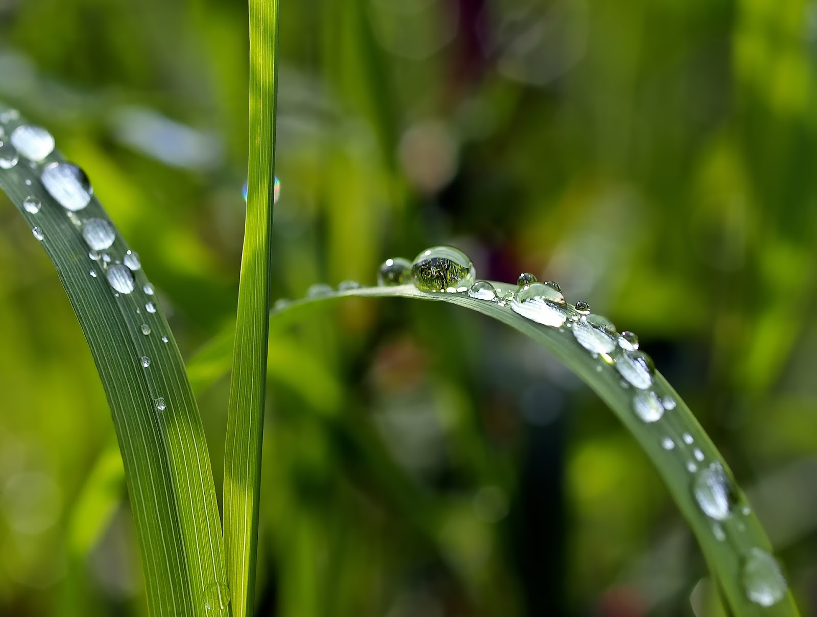 Water droplets on plant leaves