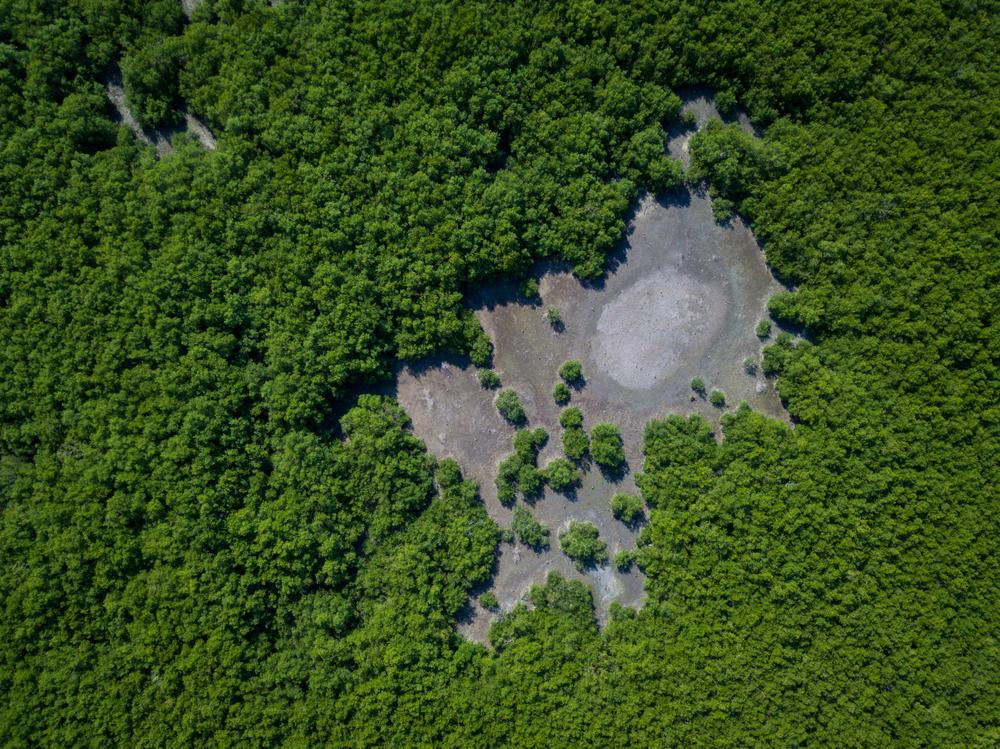 Ban Laem Mangroves