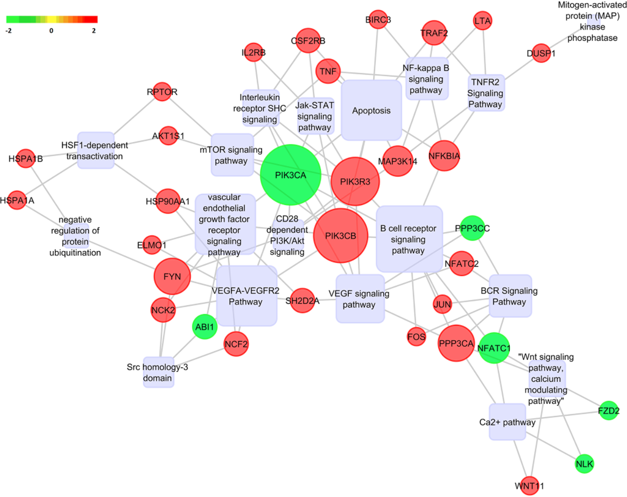 Figure 9: Pathway analysis. Gene regulatory network analysis for DEGs upon Notch2 knockdown were predicted by Pathreg algorithm and visualized in Cytoscape v2.8.2. Predicted pathways are depicted as rounded rectangles, where shades in red correspond to upregulated genes and shades in green correspond to downregulated genes.
