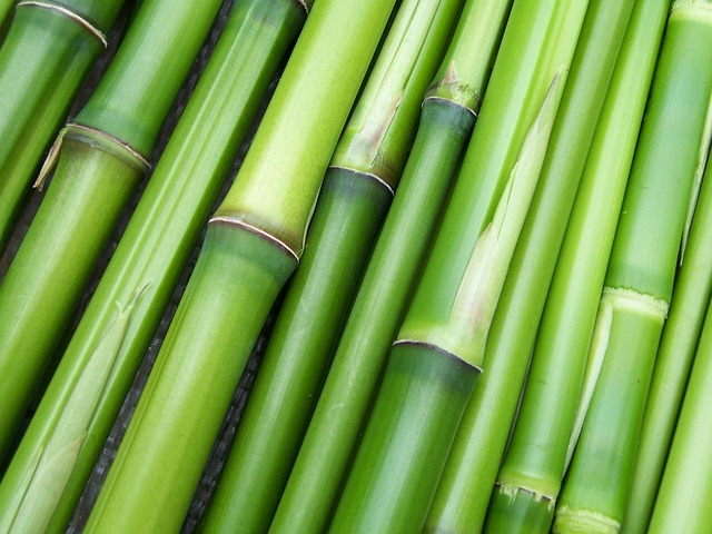 Bamboo is non-toxic to dogs.