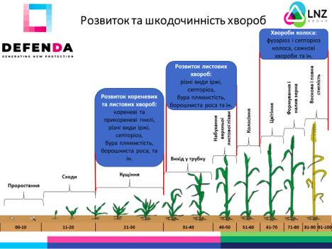 Фунгіцидний захист озимої пшениці від DEFENDA фото 1 LNZ Group