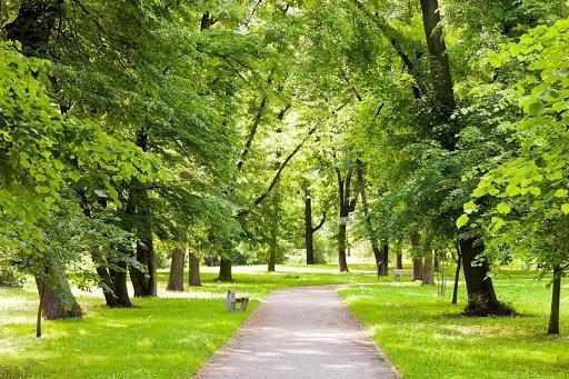 Dịch vụ cắt tỉa cây ở Long An được nhiều người quan tâm