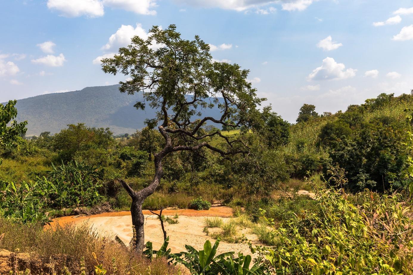 Ein Bild, das Baum, draußen, Himmel, Gras enthält.  Automatisch generierte Beschreibung