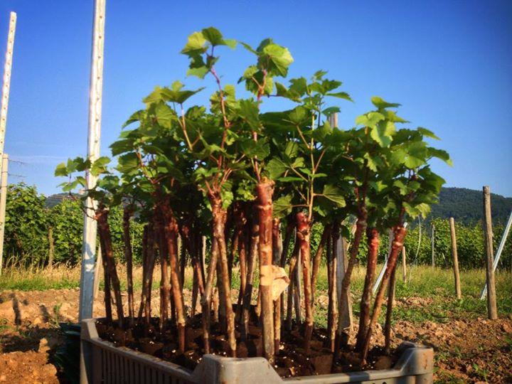 Plants sortis de la pépinière, prêts à être mis en terre.