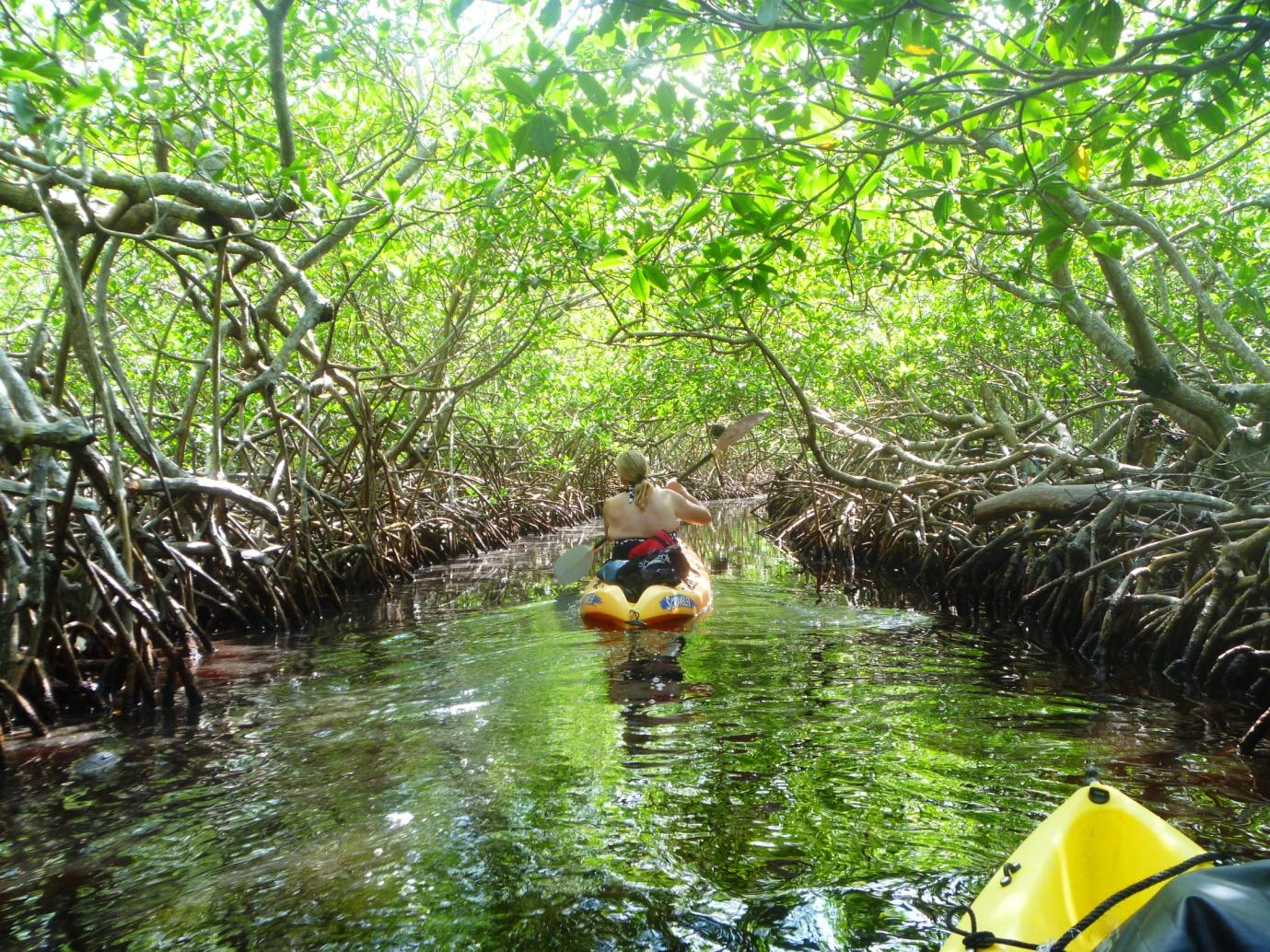 3) Mangrove.jpg