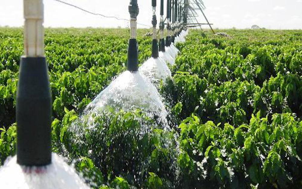 coffee farm irrigation