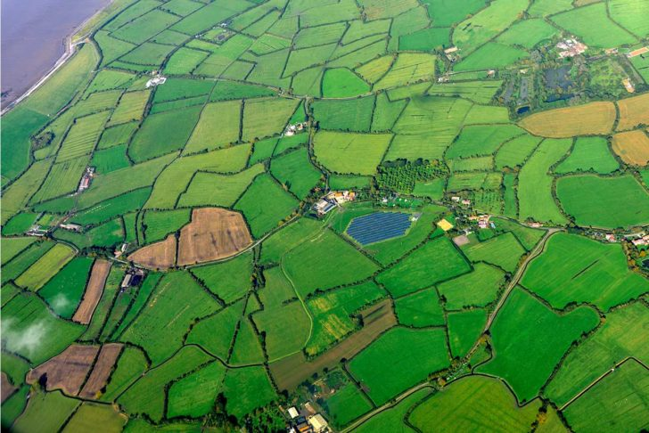 An aerial view of bright green fields with hedgerows around the edges