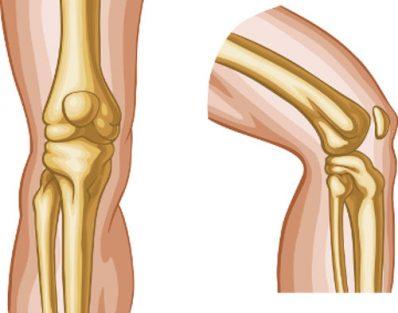 Quais são os 3 tipos de articulações do corpo humano?