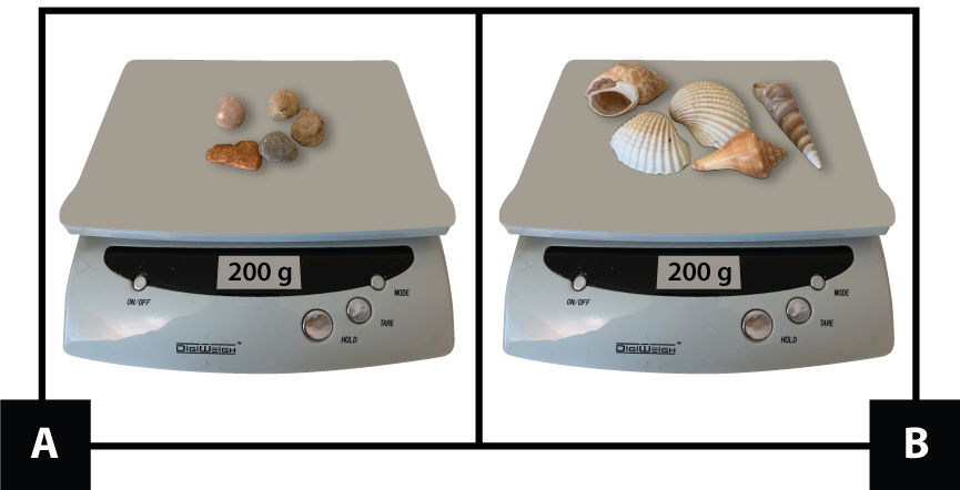 A: A scale with 5 small stones shows 200 grams. B: A scale with 5 shells shows 200 grams.