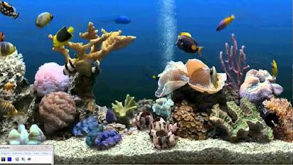 aquarium screensaver free download full version