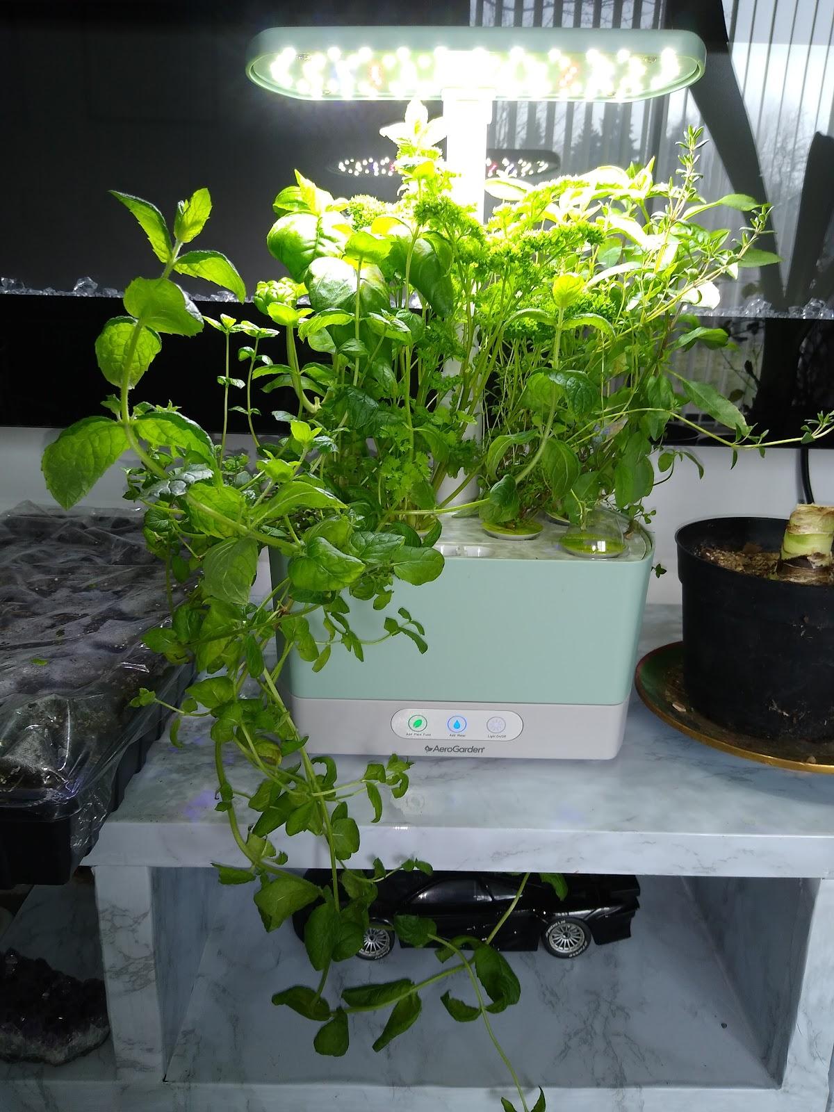 aerogarden harvest picture