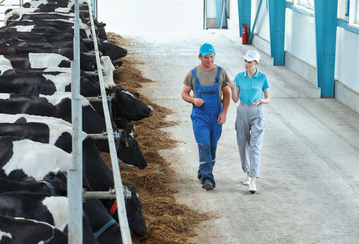 продуктивность коров является