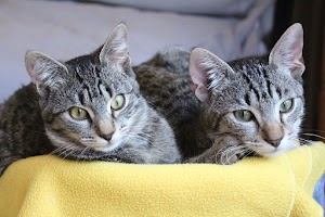 What to do if your bonded cats fight